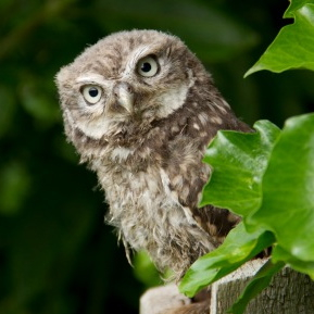 owl-10-2