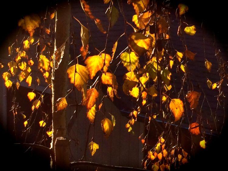 leaves-s
